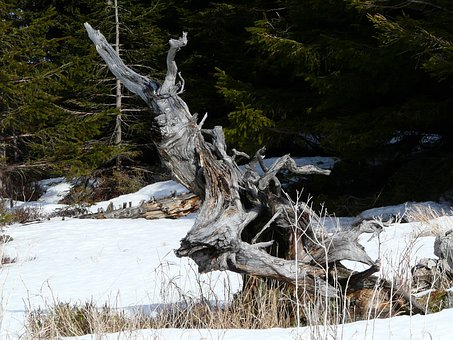 Tree Root, Root, Landscape, Wintry, Snow, Hiking, Hike