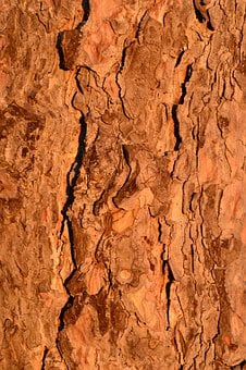Tree, Trunk, Bark, Forest, Wood, Natural, Plant