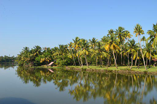 Backwater, Coconut Trees, Coconut, Kerala, Water, River
