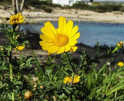 Arnica, Flower, Blossom, Nature, Flora, Yellow, Petals