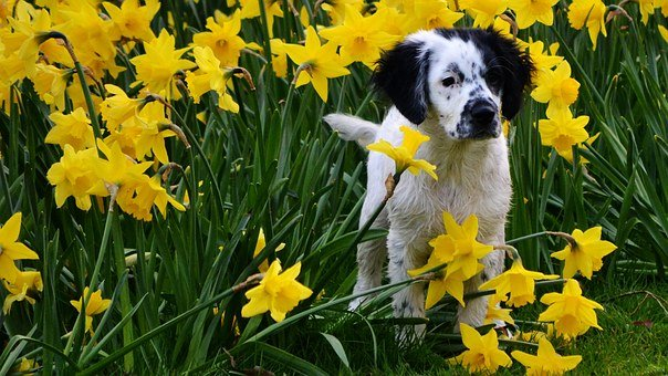 Cute, Spring, Narcis, Flowers, Nature, Netherlands