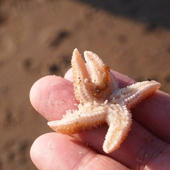 Starfish, Hand, Fingers, Woman, Sea, Beach, Sun