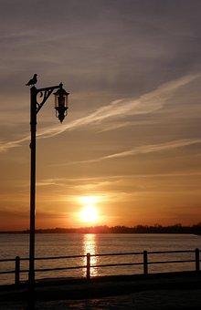 Goodnight, Sun, Bird, Wildlife, Sky, Reflections, Water