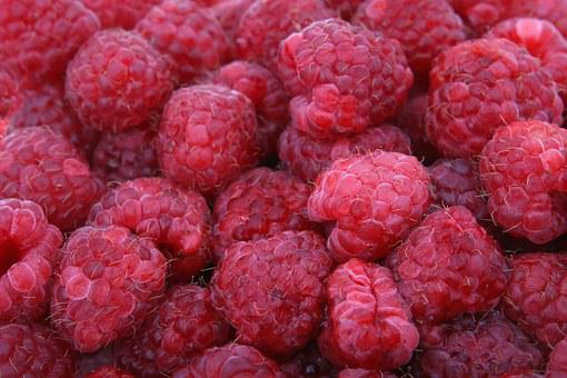 Background, Berries, Berry, Bitter, Blackberry