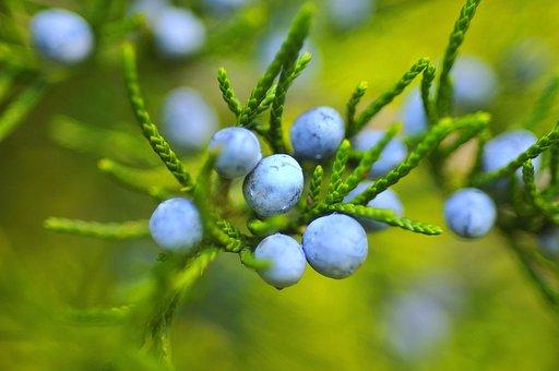 Berries, Blackberries, Blueberries, Fruit, Mature