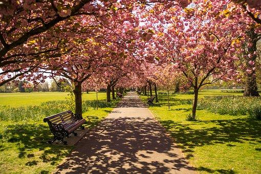 Park, London, England, Nature, Uk, City, Britain, Grass