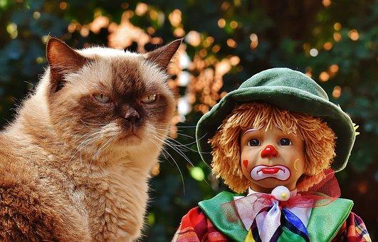 Doll, Clown, Sad, Cat, British Shorthair, Race, Cute