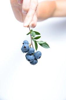 Blueberries, Bunch, Berries, Bunch Of Berries