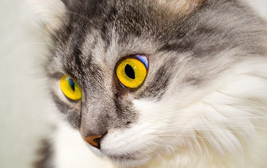 Cat, Cat's Eyes, Eyes, Face, Cat Face, View, Animal