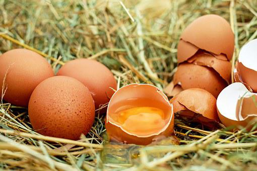 Eggs, Chicken Eggs, Raw Eggs, Eggshells, Egg Yolk
