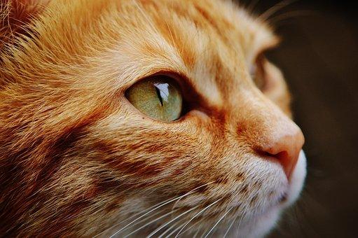 Cat, Face, Close, View, Eyes, Portrait, Adidas