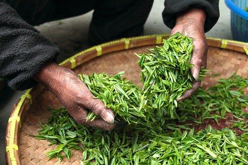 Tea, Farmhouse, Hand, Fresh