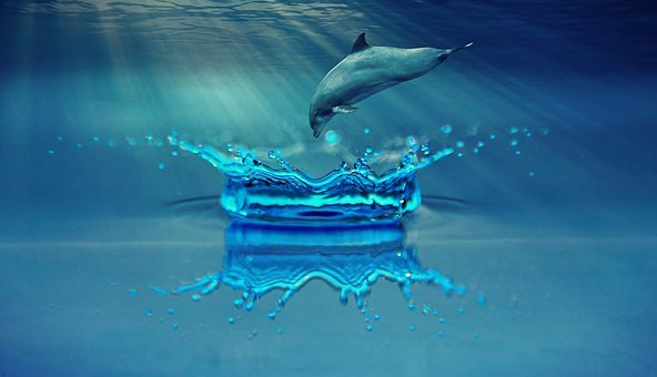 Dolphin, Animal, Marine Mammals, Water, Sea, Ocean