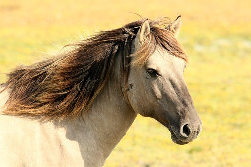 Horse, Pasture, Nature, Animals
