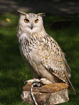 Owl, Bird, Animal, Eagle Owl, Eurasian Eagle Owl