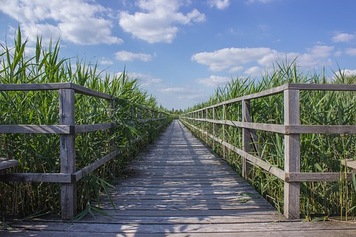 Web, Boardwalk, Reed, Target, Focus, Away, Nature, Moor
