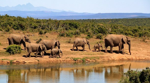 Elephants, Herd, Safari, Calves, Baby Elephants