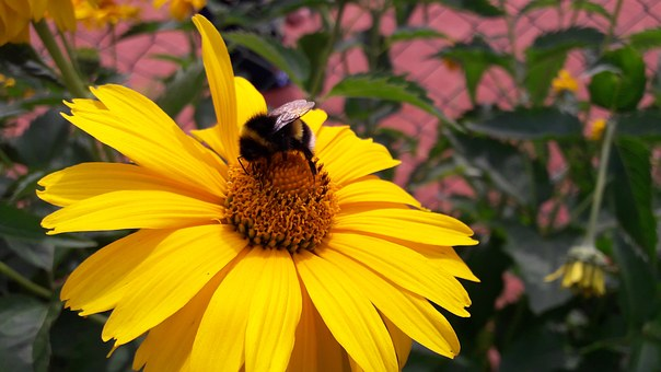 Bee, Flower, A Yellow Flower, Wasp, Bumblebee, Bloom