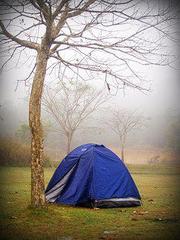 Camp, Tent, Tree, Forrest, Outdoor, Activity, Holiday