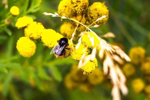 Bumblebee, Baby, Bee, Small, Cute, Happy, Innocence