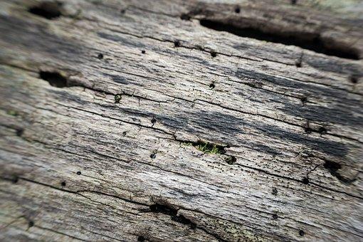 Bark, Bark Beetles, Tree Bark, Injury, Wood, Morsch