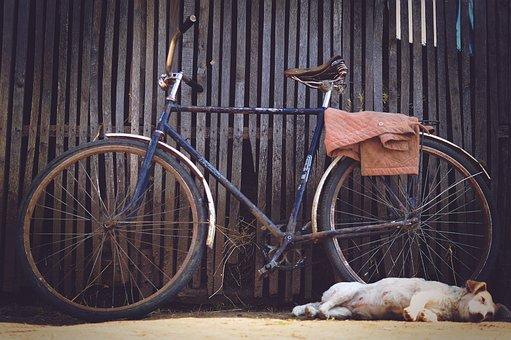 Cowshed, Village, Bike, Barn, Rustic, Dog, Sleep, Fence