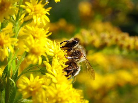 Bee, Bug, Bees, Flowers, Nature, Insects, Bumblebee