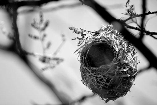 Birds Nest, Shelter, Nature, Home