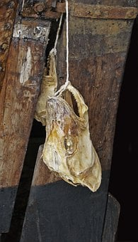 Head, Fish, Bone, Skull, Carcass, Hanging, Macro
