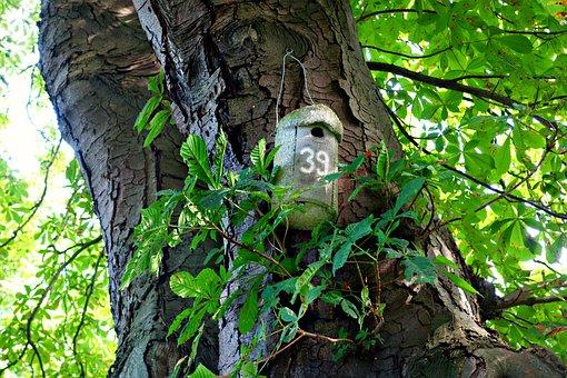 Nestbox, Bird Box, Birdhouse, Shelter, Eggs, Breeding
