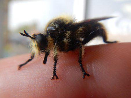 Bee, Bumblebee, Insect, Bug, Finger, Nature, Animal