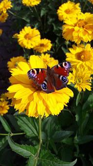 Butterfly, Bee, Flower, A Yellow Flower, Wasp