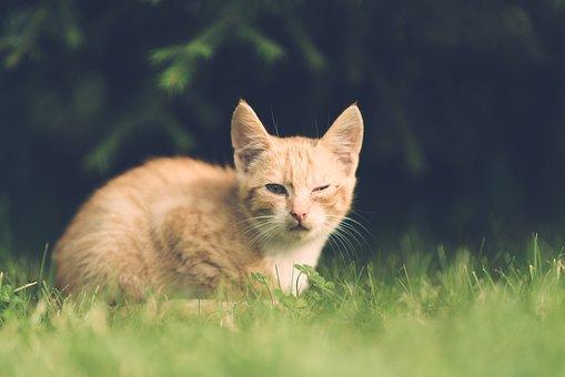 Cat, Eye, Injury, One Eye, Village, Illness, Vintage