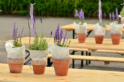 Lavender, Flower Pots, Beer Tent Set, Decoration