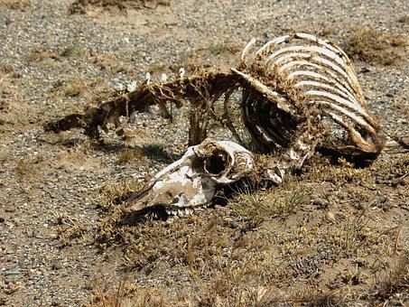 Carcass, Skeleton, Animal, Desert, Nimal, Dead