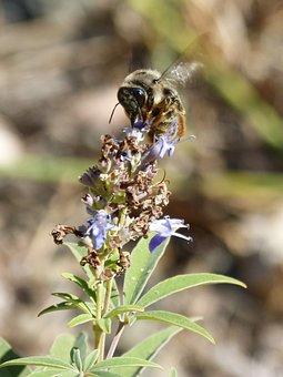 Bumblebee, Flower Libar, Flap