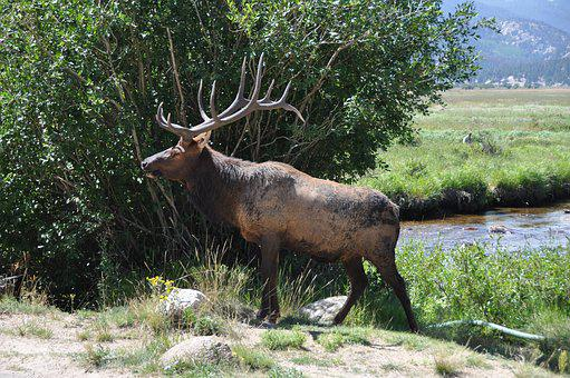 Hirsch, Nature, Wild, Antler, Animal World, In The Free