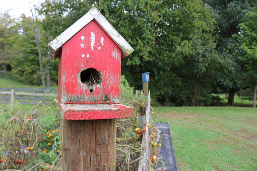 Bird, House, Red, Nature, Birdhouse, Wood, Box, Wooden