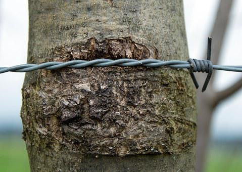 Barbed Wire, Wire, Rotated, Close Up, Wiring, Tree