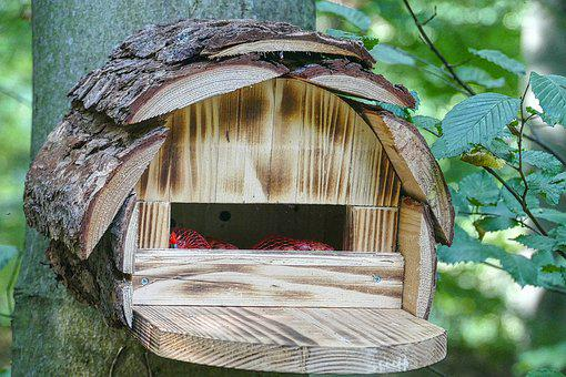 Aviary, Bird Feeder, Interesting, Shelter, Bird, Birds