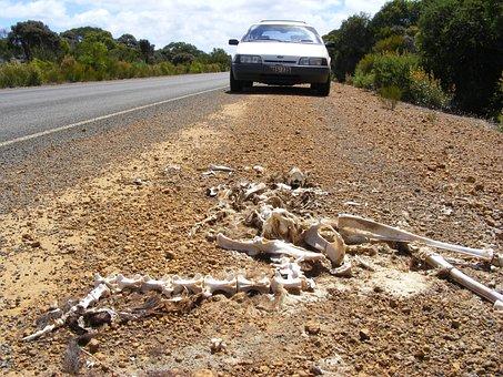 Skeleton, Kangaroo, Carcass, Kangaroo Island, Remains