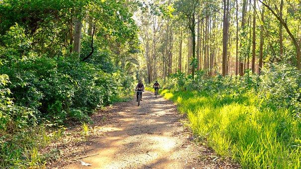 Nature, Cyclists, Bike, Trail, Sport, Holidays, Cycling