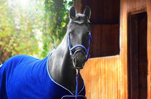 Horse, Black, Friesen, Head, Animal, Nature, Stall