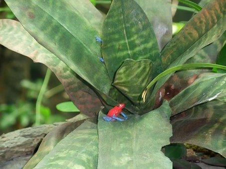 Frog, Plant, Leaf Foliage Plants, The Frog, Green