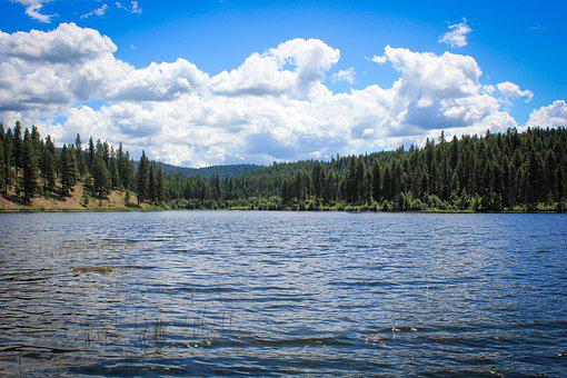 Lake, View, Pine Trees, Clouds, Nature, Water