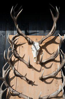 Antler, Hirsch, Trophy, Collection, Wild, Nature