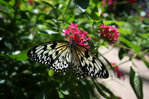 Butterfly, Nature, Bloom, Flower, Wings, Insect, Garden