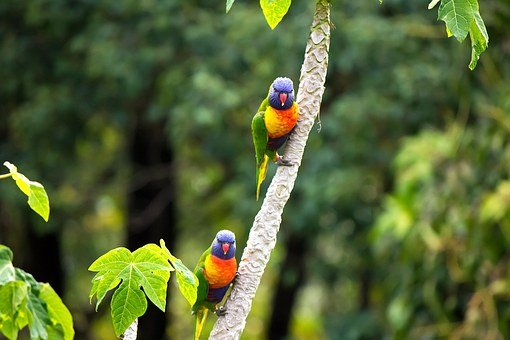 Bird, Rainbow, Parrot, Tree, Green, Colourful, Animal