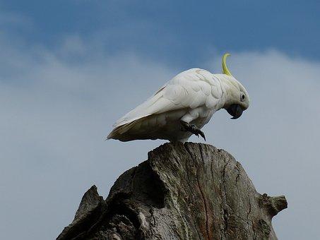 Australia, Sydney, Park, Parrot, Bird, Botanical Garden