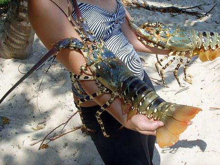 Crawfish, Sea, Crustacean, Australia